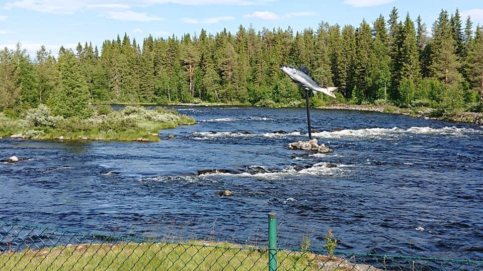 Harren i Vojmån Vojmåns Camping